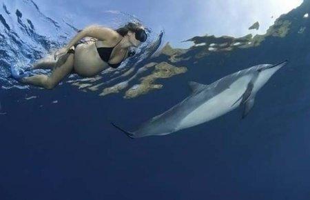 theshiftofconsciousness.info/dolphin.html